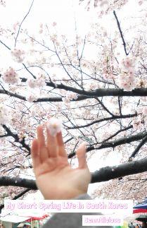 My Short Spring Life In South Korea