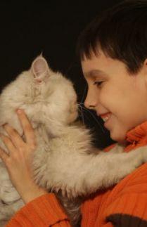 Ardi dan Alas Si Kucing Putih